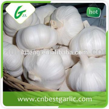 cheap china cheap garlic jinxiang fresh red/normal/pure white garlic factor with low price