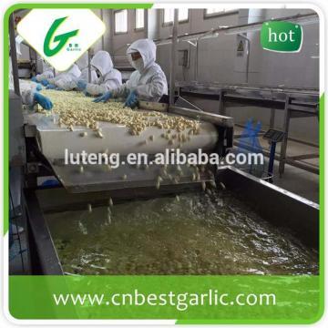 2015 new crop fresh peeled garlic packed in jar factory in jinxiang