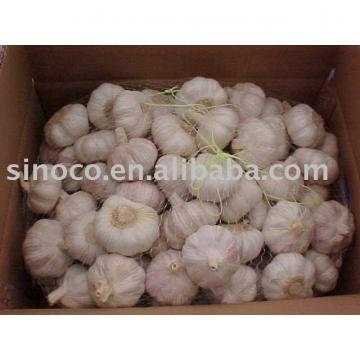 jinxiang garlic new crop