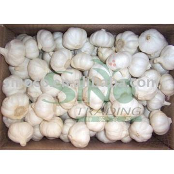Discount offer for China garlic
