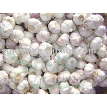 fresh garlic/nornal white garlic/pure white garlic