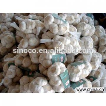 cold store normal white garlic crop 2017