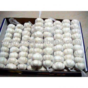 Fresh Garlic In China (Normal white)