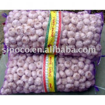 New Crop Garlic China