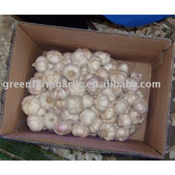 2011 chinese jinxiang fresh garlic