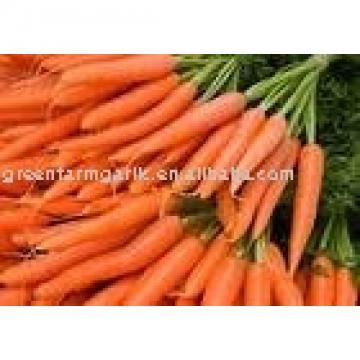 2011 new fresh carrot