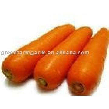 new fresh carrot 2017 price