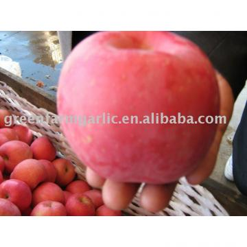 red fuji apple exporter in China