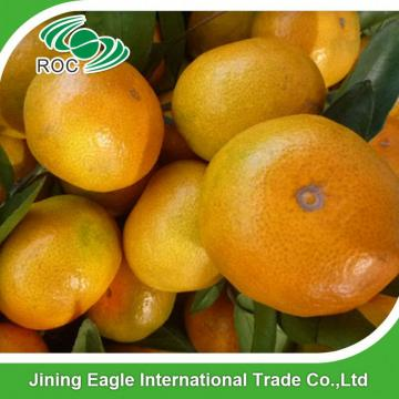 Nanfeng delicious small fresh baby mandarin orange