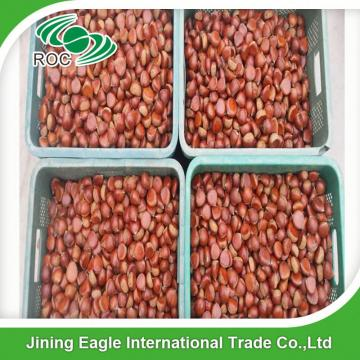 Bulk large nutritous sweet fresh chestnuts with best price