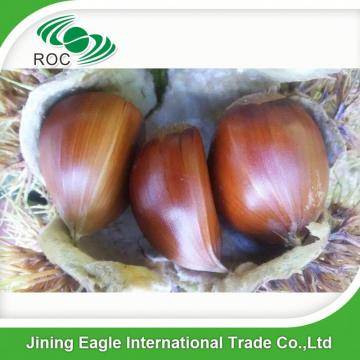 Wholesale common cultivation type nutritive fresh chestnuts