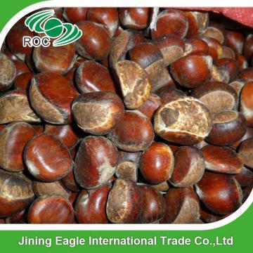 Wholesale top quality fresh organic chestnut