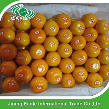 Chinese fresh sweet baby mandarin orange fruit