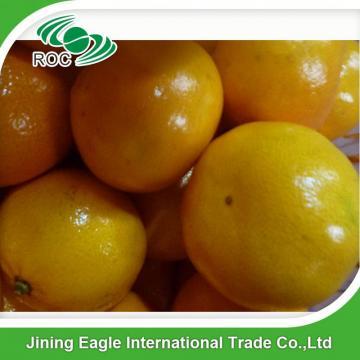 Fresh nanfeng small honey mandarin orange fruit