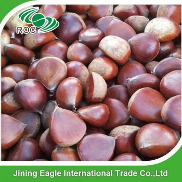 Wholesale new nutritive fresh sweet chestnut