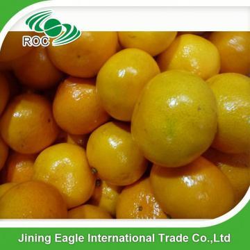Chinese sweet small fresh honey mandarin orange