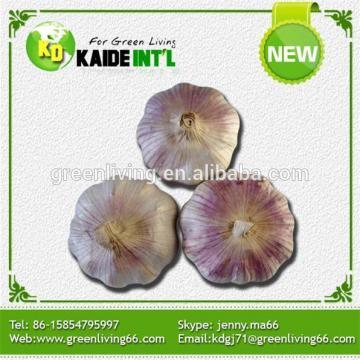 China White Garlic On Farm
