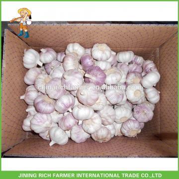 Chinese Normal White Garlic--Rich Farmer Brand