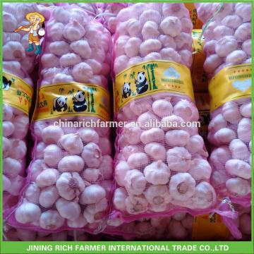 Rich Farmer Brand Fresh Garlic For Sale