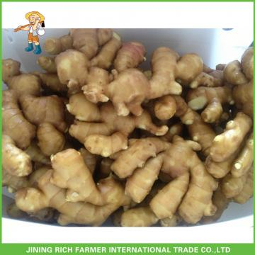 Competitive Price Wholesale New Young Ginger