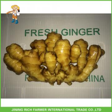 China Fresh Ginger For Wholesale