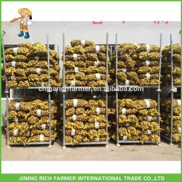 China Exporter New Crop Fresh Taro