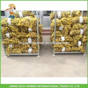 Chinese Fresh Taro 40G to 120G