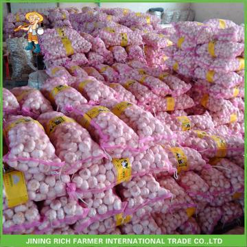 Fresh Pure White Garlic Jinxiang Pizhou High Quality Good Price Mesh Bag In Carton