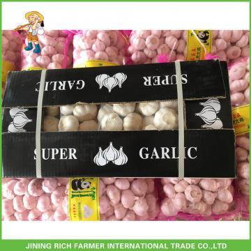 Hot Sale Fresh Normal White Garlic 5.0 cm /5p In 4 Mesh Bag For Jordan