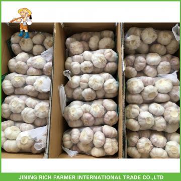 2017 Cheap Price High Quality New Fresh Normal White Garlic 5.0cm In 10KG Carton For Bangladesh