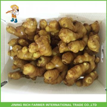 Wholesale Fresh Ginger 200g Up From Professional