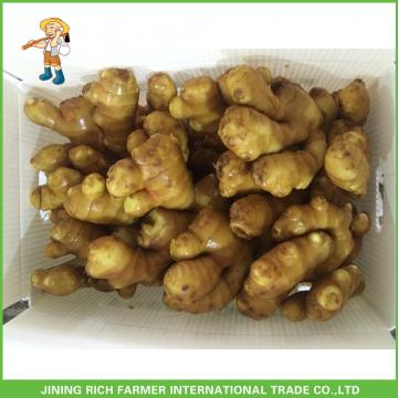 2017 Agricultural Crops Fresh Ginger Health Ginger