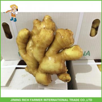 2017 Top Quality Fresh Ginger For Sale