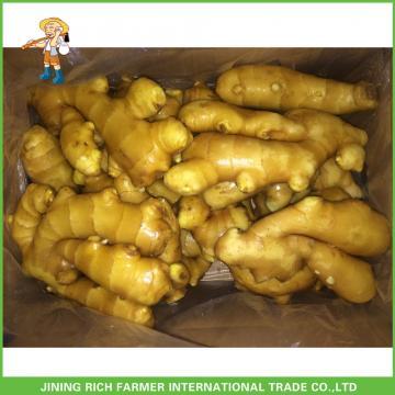 150g+ Fresh Ginger