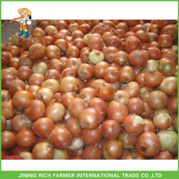 Shandong Fresh Onion With Best Price