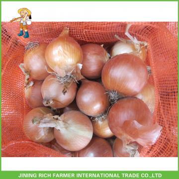 New Arrival Fresh Onion 5-9cm Size