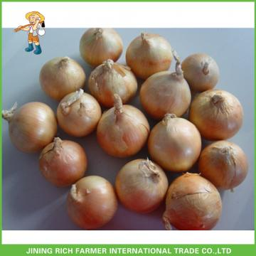New Arrival 7.0cm up Fresh Onion Leading Supplier