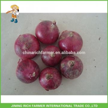 Hot Sale China Rich Farmer Top Quality Chinese Fresh Red Onion