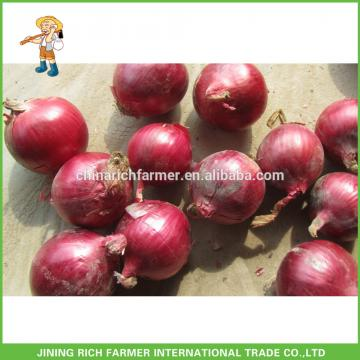 High Quality Fresh Onion of 5-7cm Size Supplier and Exporter