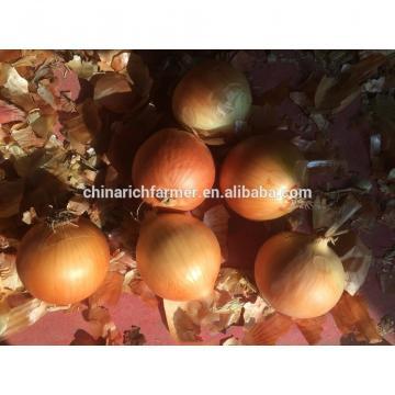 Fresh Yellow Onions 25kg 23kg
