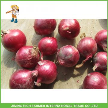 High Quality Fresh Onion 5-7cm Size