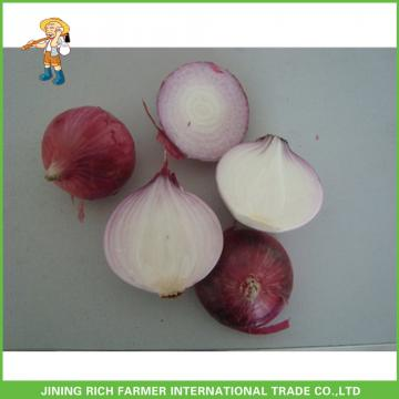 High Quality & Best Price Chinese Fresh Onion 5-7cm Size