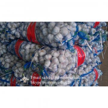 New Crop 5.5cm Normal White Fresh Garlic In 10 kg Mesh Bag packing