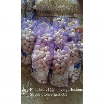Chinese Fresh Normal White Garlic Packed In Mesh Bag