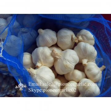 New Crop 6cm and up Normal White Fresh Garlic In 10 kg Mesh Bag packing