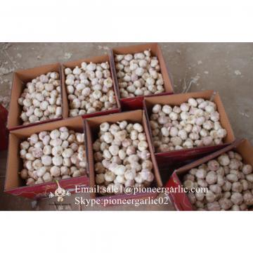 Chinese Fresh Garlic Normal White Red Garlic Exported to Tunisia Market