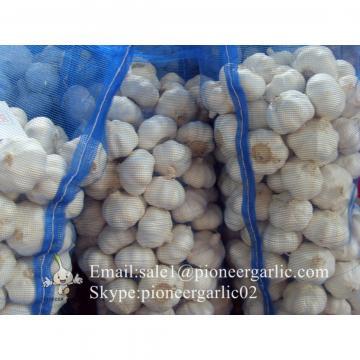 2017 New Crop 5cm Normal White Fresh Garlic 10kg Mesh Bag Packing