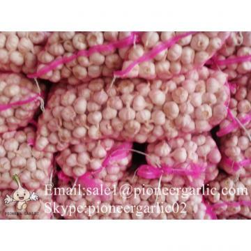 4.5-5cm Normal White Chinese Fresh Garlic In Mesh Bag Packing