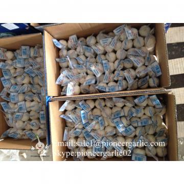 Chinese Fresh Jinxiang Snow White 5.5cm Garlic Small Packing In 10kg Box