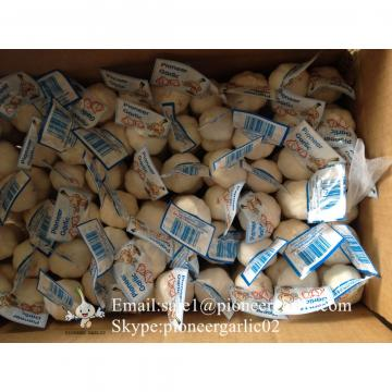 Chinese Fresh Jinxiang Snow White 5.5cm Garlic Small Packing In 10kg Box